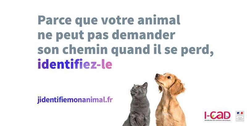 Semaine nationale de l'identification des chiens et des chats